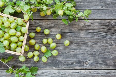 Wooden basket full of fresh picked gooseberries decorated by leaves. Healthy summer food Фото со стока