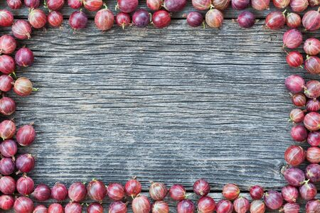 Lot of raw red gooseberries lying in a frame on a weathered board Stock Photo
