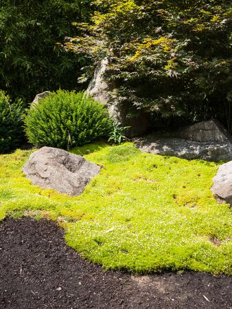 Decorative garden background with beautiful moss on the lower floor of the park