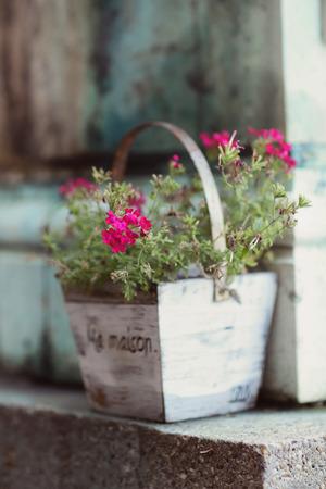 木製植木鉢にピンクの花の詳細 写真素材