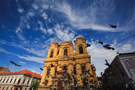 palomas volando: Plaza Unirii en Timisoara, Rumania palomas volando día soleado