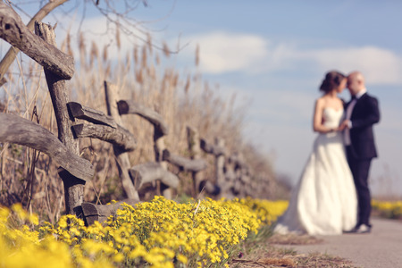 yellow wildflowers: Yellow wildflowers with bride and groom as silhouettes Stock Photo