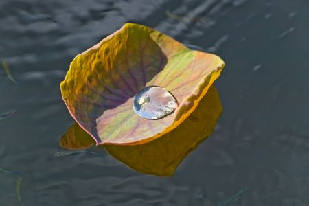 A drop of water on a floating leaf