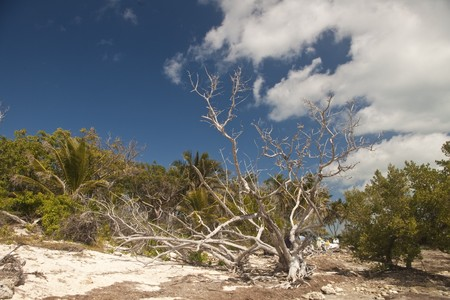 coral bark: Trees, shrubs and driftwood on a beach
