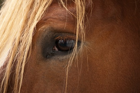 The eye of a palomino stallion