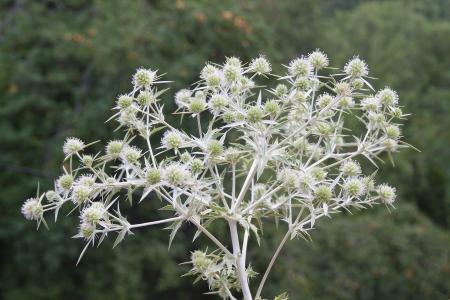 thorn bush: Thorn bush close up