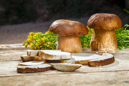 perforate: Fresh Boletus Edilus mushrooms on a wooden table - whole and sliced, mountain tea Perforate St Johns-wort Stock Photo