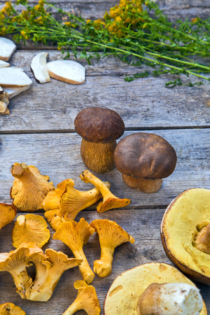 golden chanterelle: Fresh Chanterelle and Boletus Edilus mushrooms on a wooden table and slices of dried ones, mountain tea Perforate St Johns-wort