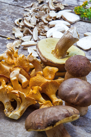 golden chanterelle: Fresh Boletus Edilus mushrooms on a wooden table and slices of dried ones Stock Photo