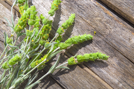 Fresh green branches with yellow flowers of mountain tea Sideritis Scardica, on a wooden table