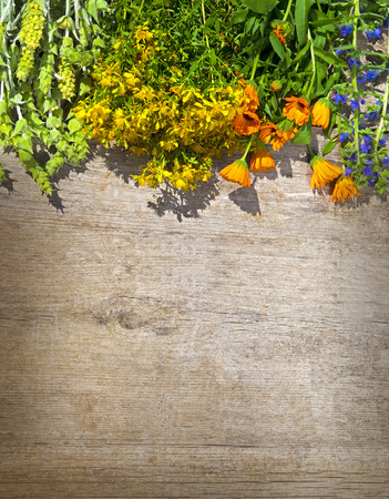 perforate: Different kinds of fresh wild herbs on a wooden table: Sideritis Scardica, Perforate St Johns-wort, Marigold - calendula (Calendula Officinalis)