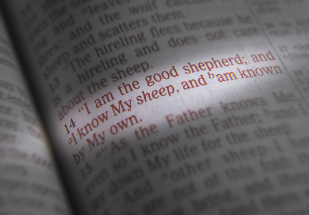 emphasize: I am the good shepherd; and I know My sheep, and am known by My own Bible text from John 10:14, the Bible. Visual effects to emphasize the message. Macro