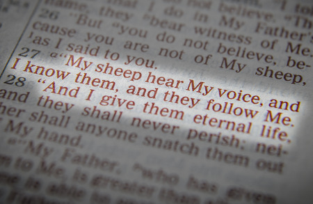 I am the good shepherd; and I know My sheep, and am known by My ownBible text from John 10:14, the Bible. Visual effects to emphasize the message. Macro Standard-Bild