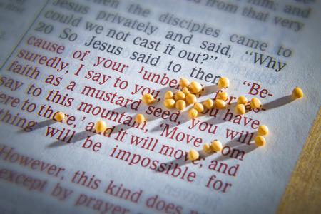 Semillas de mostaza en una página de la Biblia abierta que ilustra el versículo - si tienes fe tan pequeña como una semilla de mostaza- Mateo 17:20 Foto de archivo
