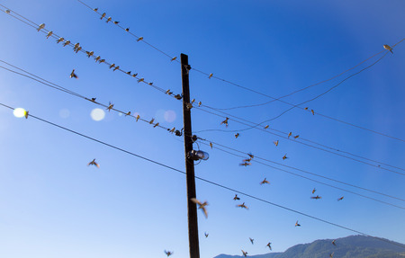 Swallows swarm sitting on a wire with clear blue sky in the background. Multitude of birds Stok Fotoğraf