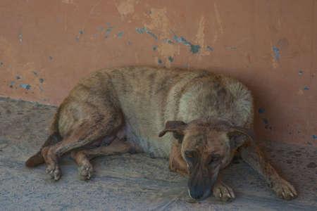 sulky: Sulky dog lying on a stone floor.