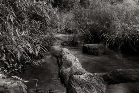 flickr: Fallen log, reeds, and a smooth, clear stream. Bramhagiri forest Karnataka, India.