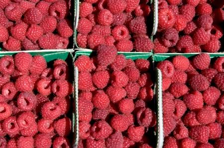 Baskets of fresh ripe raspberries Standard-Bild