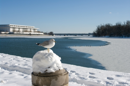 Winter in Washington DC with the Kennedy Center in the background