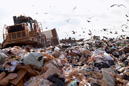 Truck working in landfill with birds looking for food 스톡 콘텐츠
