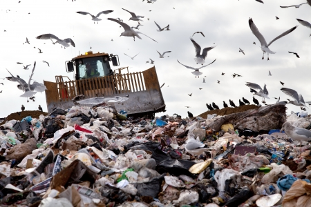 dump yard: Truck working in landfill with birds in the sky
