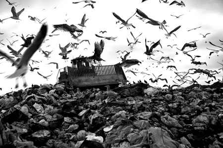 Landfill and birds photo