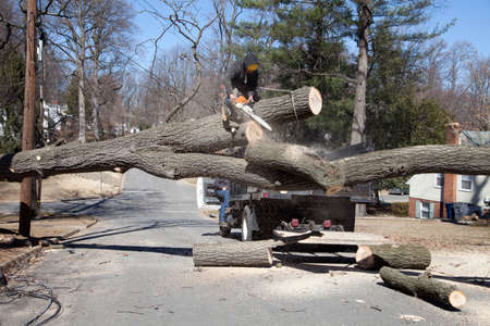 gusty: Man working on cutting uprooted tree blocking the road due to gusty wind