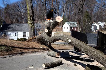 Hombre que trabaja en el corte de árboles desarraigados bloqueo de la carretera debido al viento racheado Foto de archivo