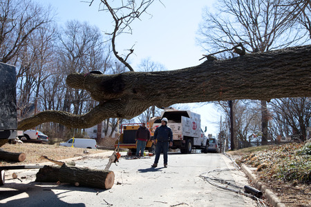 Uprooted tree removal operation after a gusty wind crossed Falls Church, VA