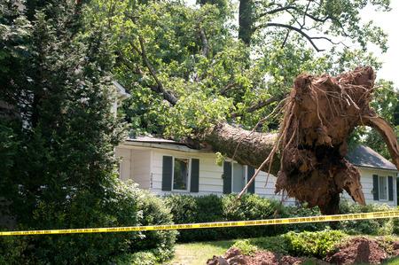 peligro: �rbol arrancado cay� sobre una casa despu�s de una tormenta seria lleg� a trav�s de