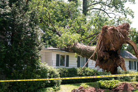 Uprooted tree fell on a house after a serious storm came through Stok Fotoğraf - 30323894