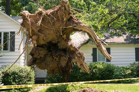 toiture maison: Arbre d�racin� est tomb� sur une maison apr�s une temp�te s�rieuse est venue par le biais Banque d'images