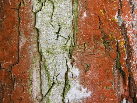 Bark covered by a moss       Stock Photo