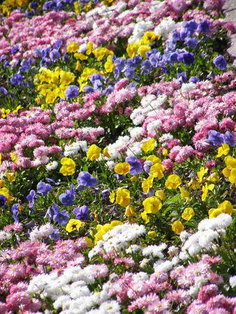 白い暗い青黄ピンクの花 写真素材