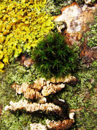 Moss, alga, a mushroom on a tree trunk
