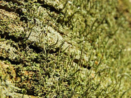 木の幹に藻