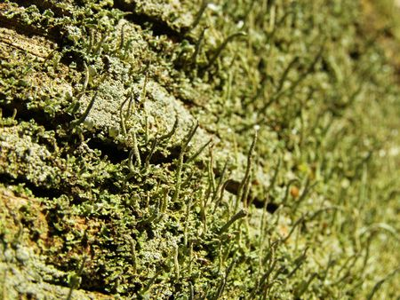 Alga on a tree trunk