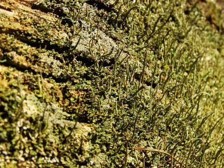 Alga on a tree trunk         Stock Photo