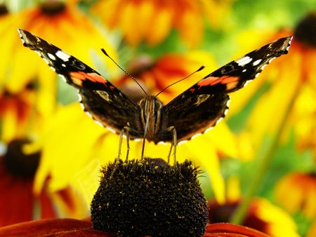 The butterfly sits on a flower