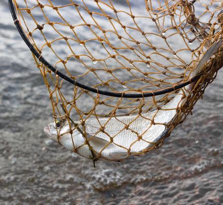 fishnet: Fish caught in the fishnet Stock Photo