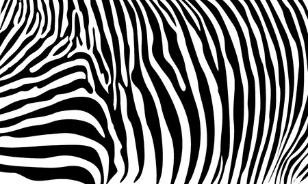Zebra pattern stripes skin background vector Illustration