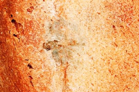 bread mold: Mold on bread  Stock Photo