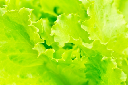 fresh salad background photo
