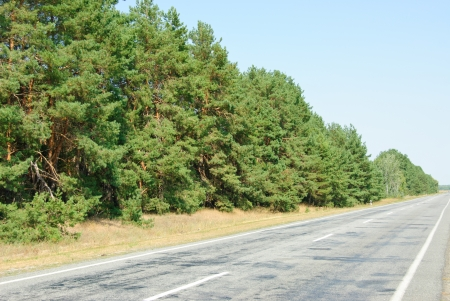 Pine forest and road on blue sky background photo