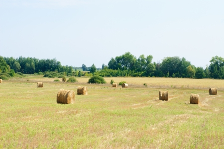 agrar: A farm field in the countryside filled with  hay bales  and blue sky
