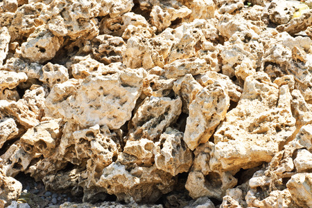 coquina: Coquina background. Grunge fossil limestone texture. Stock Photo