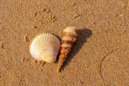 Cone shaped shells on the sand in a beautiful summer beach