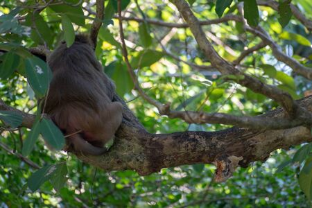 Monkey Showing his Back While Sitting on the Tree During Day Time