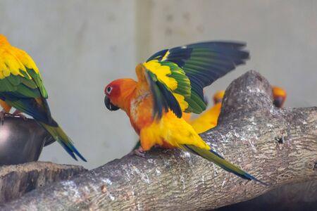 Sun Parakeet Parrot Sitting on a Tree