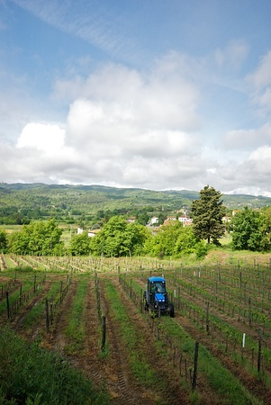 wineyard: Wineyard and tractor in Tuscany, Italy